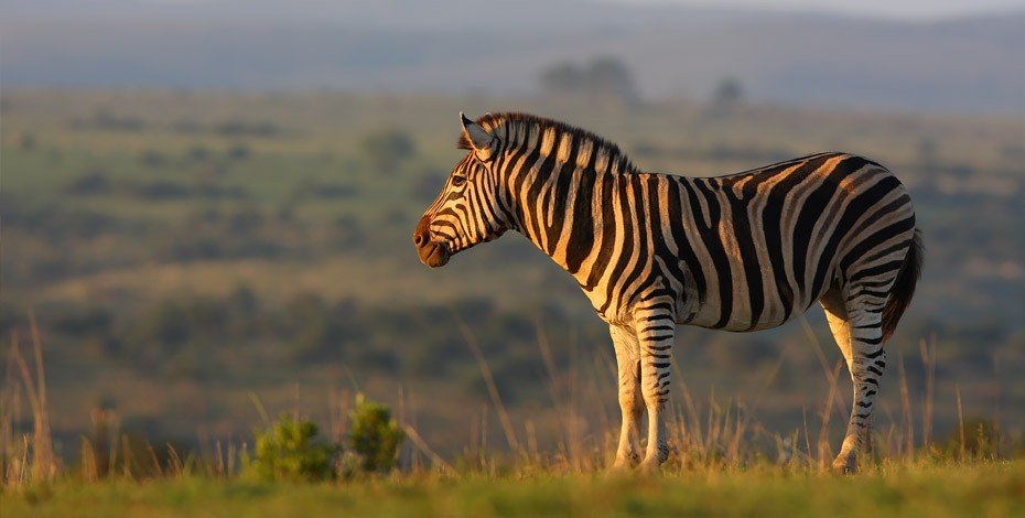 Zebra and the beautiful Eastern Cape views