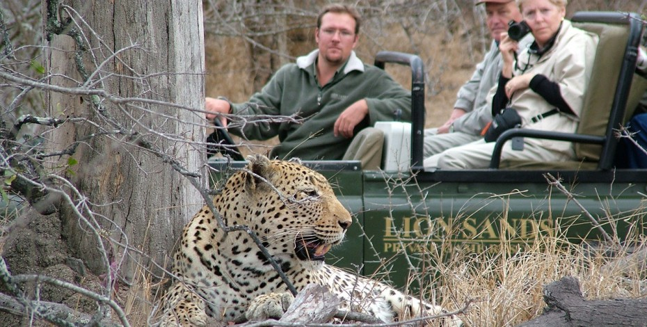 Sabi Sands is famous for big cat sightings