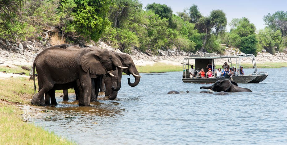 Game viewing at Chobe National Park
