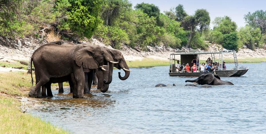 Game viewing at Chobe National Park