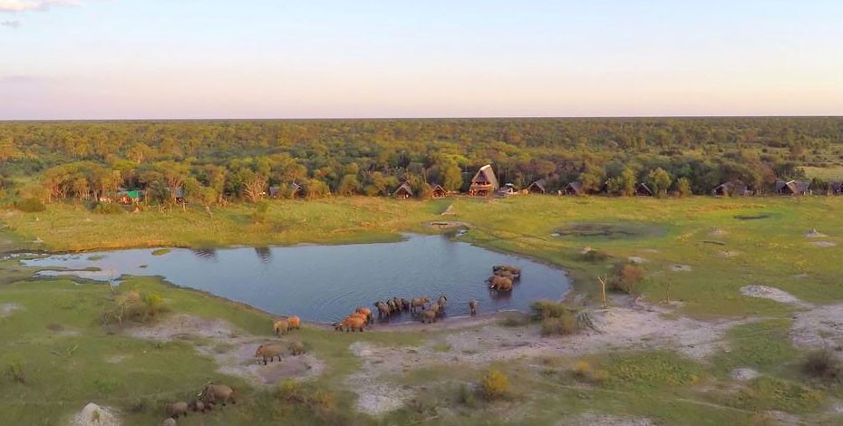 Elephant at the waterhole of The Hide