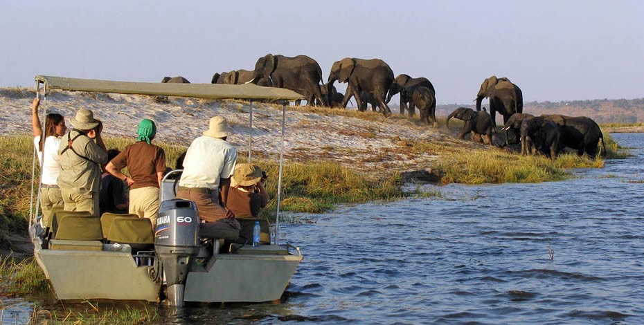 See herds of elephant at the Chobe River