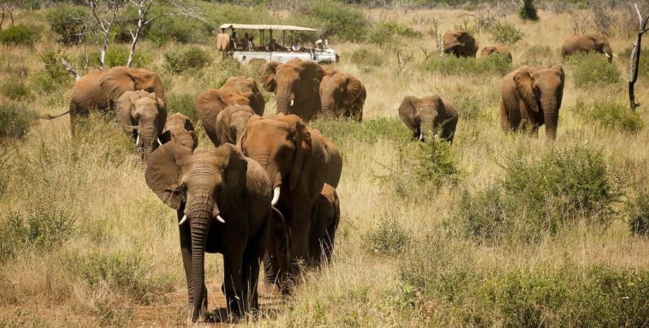 Herd of elephant in Madikwe Game Reserve