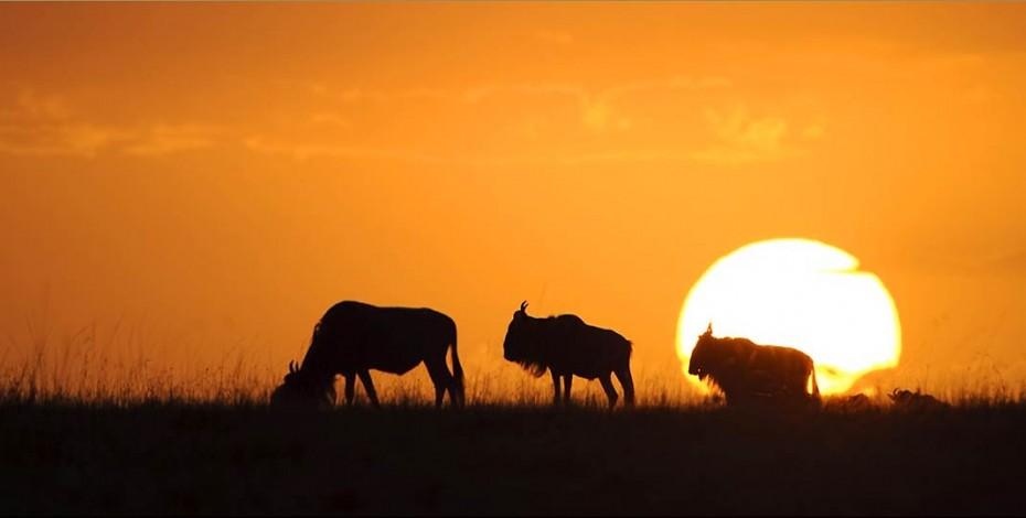 Masai Mara sunset