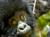 East Africa Game Parks & Gorillas Safari