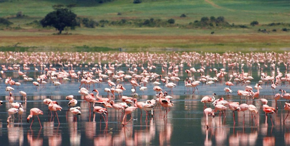Flamingos in Ngorongoro Crater