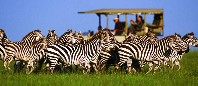 Game drive on the Serengeti Plains | Singita Grumeti Reserves