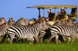 Game drive on the Serengeti Plains | Singita Grumeti Reserves