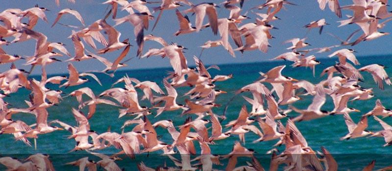 A flock of flamingoes in Mozambique