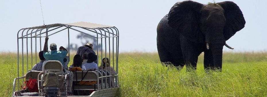 See elephant while cruising the Chobe River