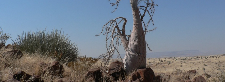 Damaraland | Ute von Ludwiger