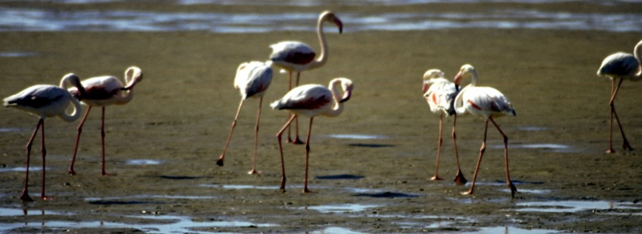 Flamingos | Namibia Tourism