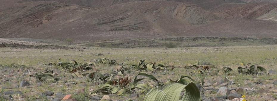 Namibia Flora | Ute von Ludwiger
