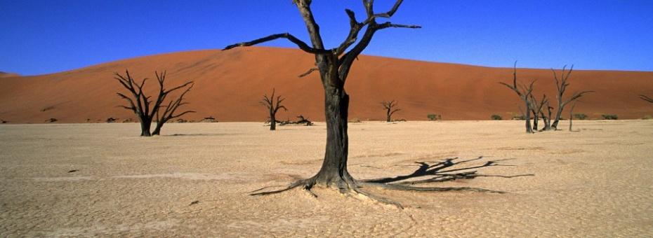 Dead Vlei | Namibia Tourism