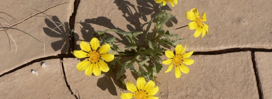 Namib Flora | Ute von Ludwiger