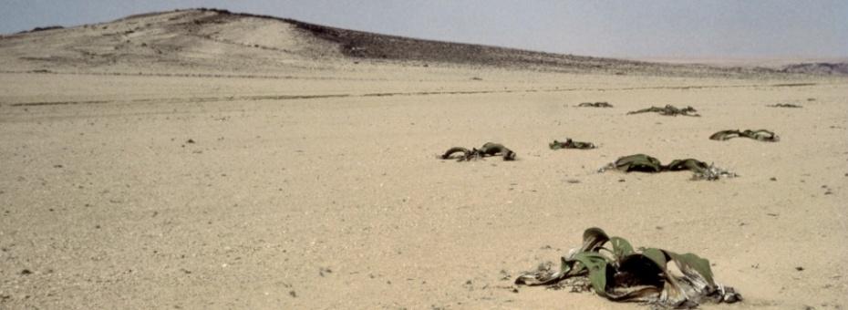 Desert Fauna | Namibia Tourism