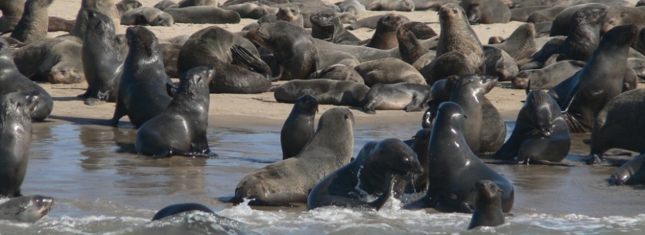Seals on the Skeleton Coast | Ute von Ludwiger