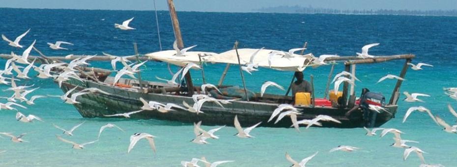 Dhow fishing in Zanzibar | Tanzania Tourist Board