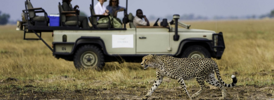 See cheetah on Zambia's Busanga Plains