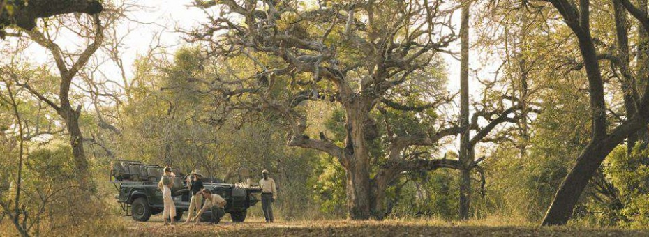 Game drive in the Sabi Sand