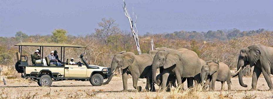South Luangwa is home to large herds of elephant