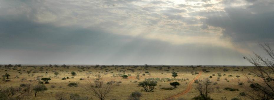 Kalahari Landscape