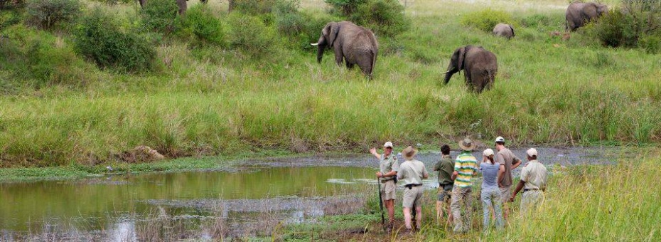 Walking safari in the Limpopo Province of South Africa