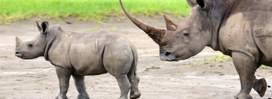 Meru is famous for it's rhino sightings