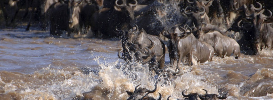 Experience the Great Migration in Kenya's Masai Mara