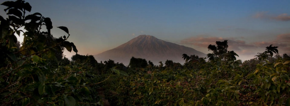 View of Mount Meru from the Arusha Coffee Lodge