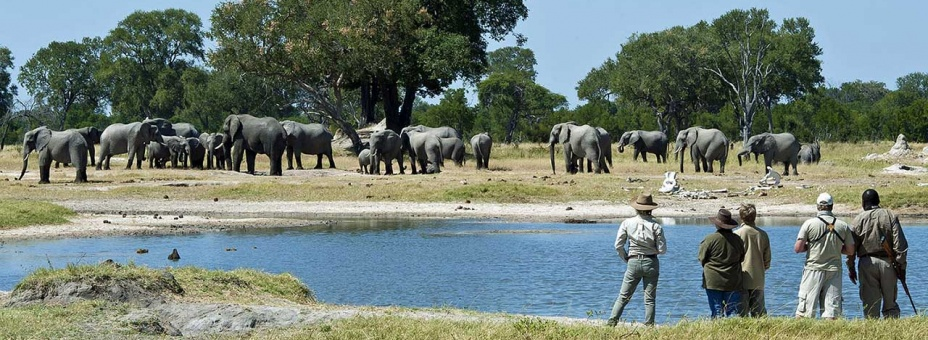 Hwange is famous for its elephant herds