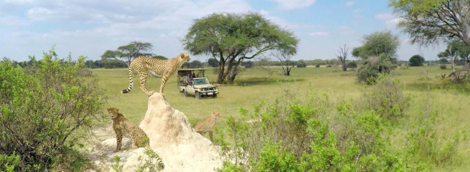 Safari game drive from The Hide in Hwange