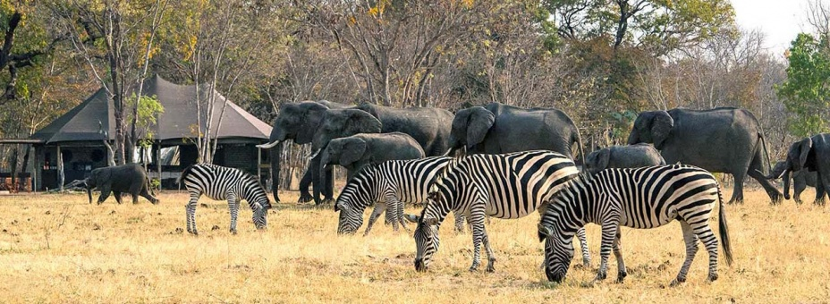 Little Makalolo is an unfenced camp in Hwange