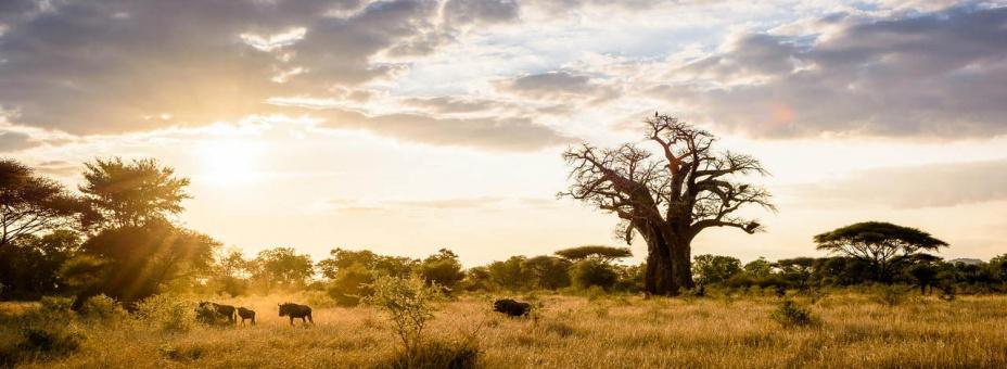Malilangwe Wildlife Reserve in Zimbabwe