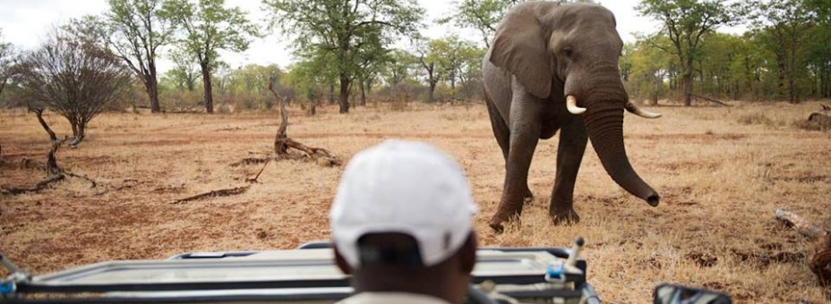 Off-the-beaten-track big game safari in Zimbabwe