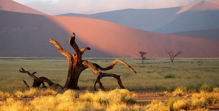 Deadvlei at Sossusvlei