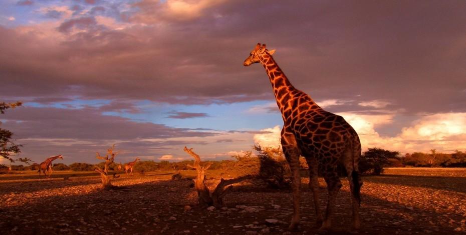 Etosha-wildlife