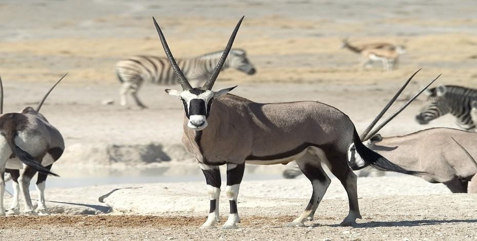 Namibia-etosha