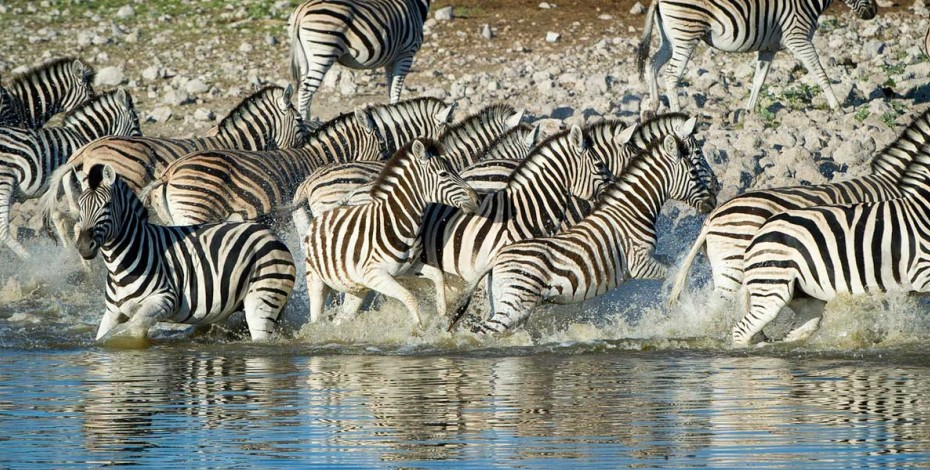 Waterhole at Etosha National Park