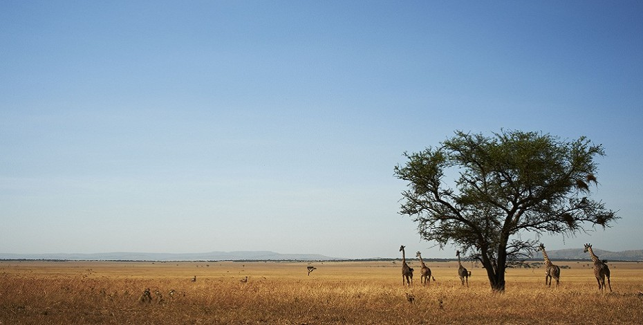 Safari on the Singita plains