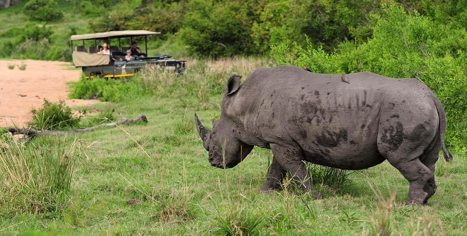 Jock Lodge is known for good rhino sightings