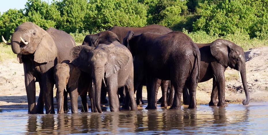 Game viewing on a Chobe River safari