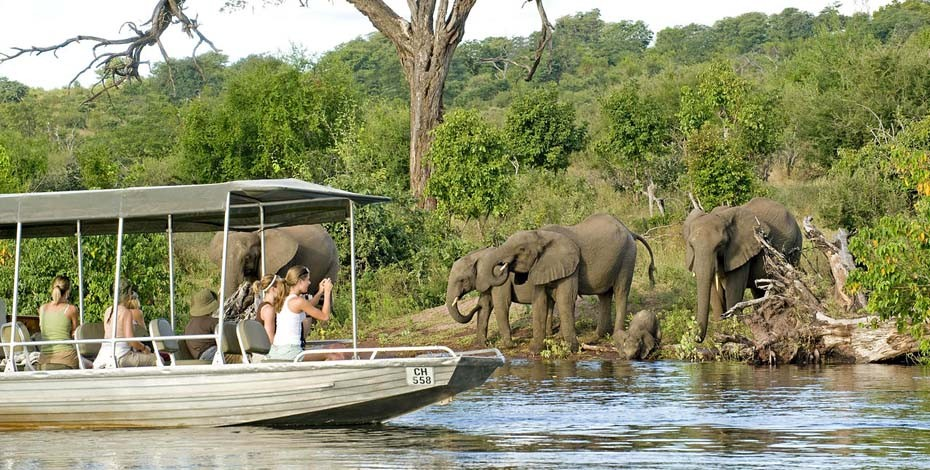 Elephant on the bank of the Chobe River