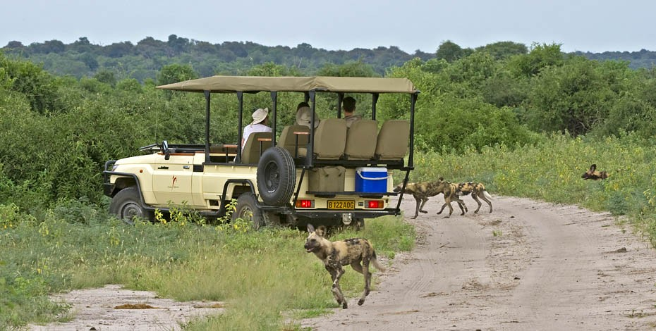 Game drive from Chobe Chilwero
