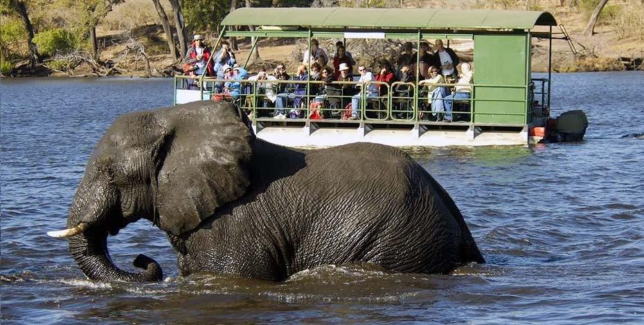 Chobe Marina Lodge river safari