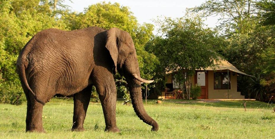 Elephant at Savanna Lodge
