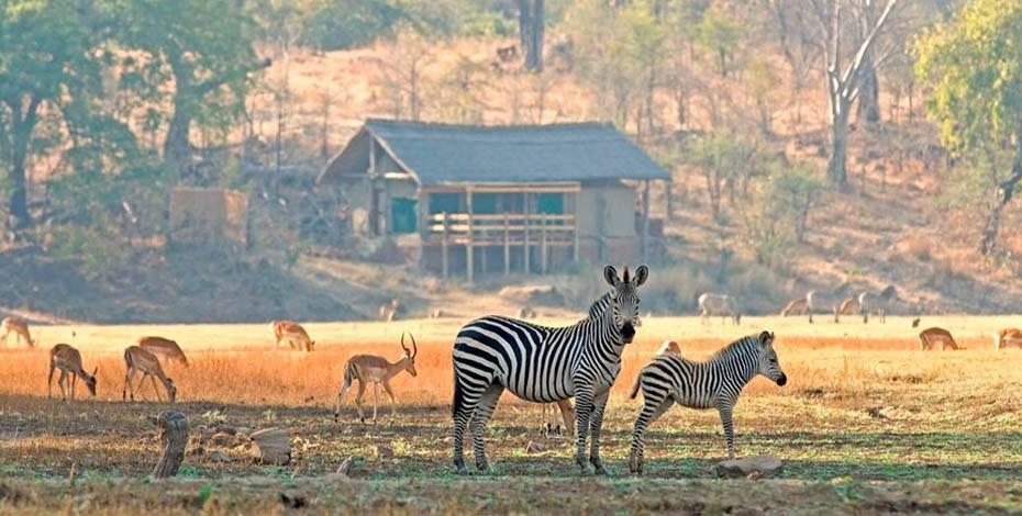 Wildlife graze in front of Sanctuary Puku Ridge