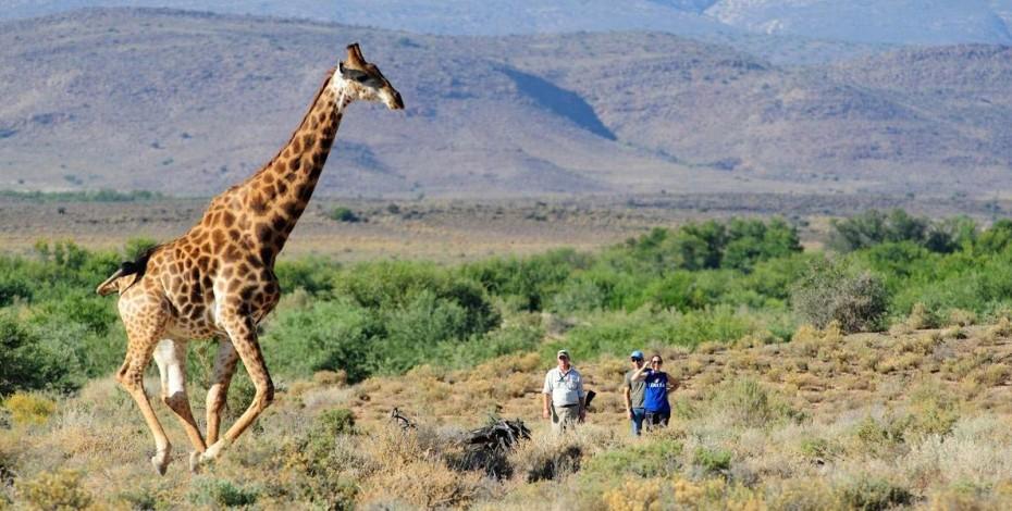 Set out on a walking safari at Sabona