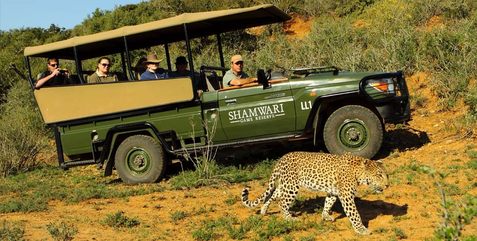 Game drive from Shamwari Long Lee Manor