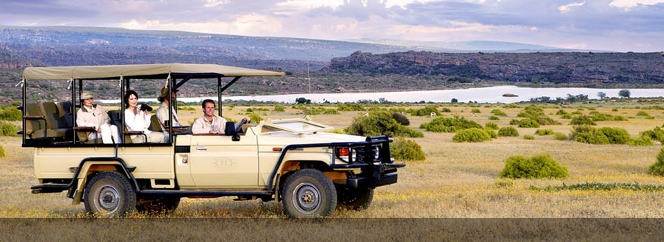 Enjoy a game drive and evening drinks in the bush at Bushmans Kloof Wilderness Reserve